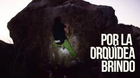UnderDog - 'Jardín de Orquídeas' V8 / 'Por la Orquídea brindo!' V10